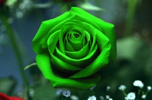 fleur rose color green (1)