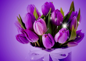 bouquet-tulipes-violettes
